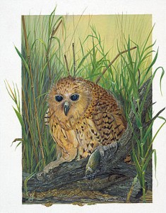 Charlotte-Pels Fishing Owl