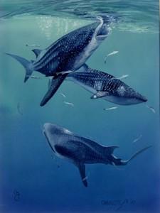 Charlotte-whale_sharks