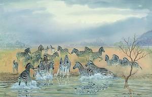 Charlotte-zebra